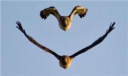 抚铝:鹰的重生