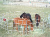 Aluminum Portable Corral Panels for Horses