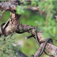盆景造型专用铝线 园林创意铝线 彩色氧化